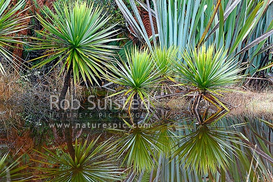 auckland native plants wetland planting guide
